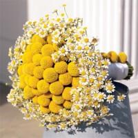 Sarı Canlı Papatya Gelin Buketi Modelleri 200x200 Papatya Gelin Buketi Modelleri