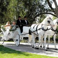dugun arabasi fikirleri 1 200x200 Düğün Arabası Fikirleri